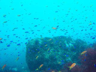 秋はベストシーズン!色々な魚の群れがたくさん見られます!