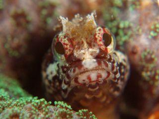 みんな個性的な海中世界の住人達。小さな生物もじっくり見てみてね!