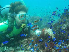 初めてチャレンジする方でも練習をしてから海中探検に出発するので安心です。たくさんの魚に囲まれてダイバー気分満喫!
