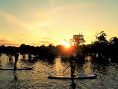 マングローブの河口でサンセットSUP 夕陽で紅葉のように色づいて見えるヒルギ林の景色は絶景