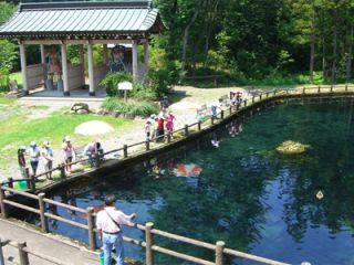 マスやイワナのいる大きな池♪