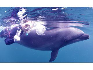 イルカの背びれにつかまって、一緒に泳ぐことができます