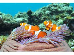 体験ダイビングは、水深6mまでのポイントで行います。美しいサンゴ礁やかわいい熱帯魚を観察できますよ。