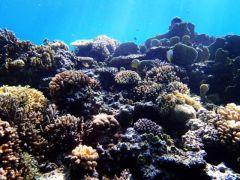 シュノーケルポイントはこだわりの西表やバラス島周辺のポイントです。たっぷり2つのポイントで泳げます。