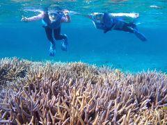のんびりシュノーケルを満喫。熱帯魚やカラフルなサンゴにも手が届きそう!