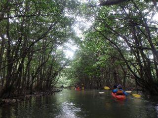 珍しい動植物を観察、マングローブの川を漕ぐ