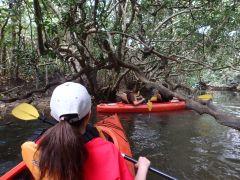マングローブの森を漕ぐ
