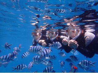 シュノーケル中には熱帯魚の餌付けもできちゃうんです!!