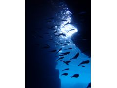洞窟内にもたくさんの魚が待ってます!