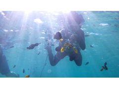 沖縄出身のカラフルな熱帯魚たちと一緒にシュノーケリング ♪