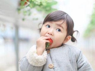 安心安全に配慮した美味しい完熟イチゴを「ぱくりw」