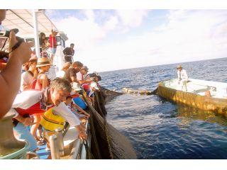 間近で見る定置網漁は圧巻!
