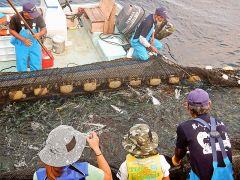 何が捕れるかお楽しみ?!運がよければ、巨大なジンベイザメ、マンタ、ウミガメ・・・等を目の前にすることができます。