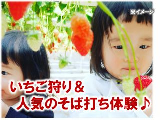 旬のいちご狩りと福井で人気のそば打ち体験のセットプラン!