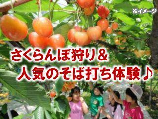 旬のさくらんぼ狩りと福井で人気のそば打ち体験のセットプラン!