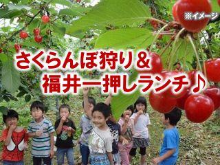 旬のさくらんぼ狩りと福井一押しランチのセットプラン
