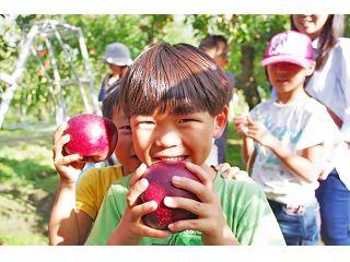 お気に入りのりんごを見つけてみてね♪