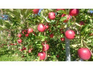 減農薬肥化学肥料栽培で安心のふるさとの味☆