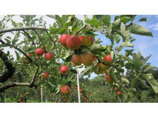 ◆*りんご狩り園内食べ放題&煮込みうどんセット*◆