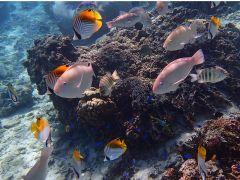 たくさんのお魚さんがすぐ近くまで来てくれる!色々な種類の魚を間近で見てみよう!