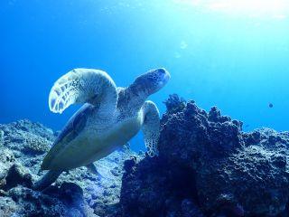 ウミガメと一緒に泳ごう!!