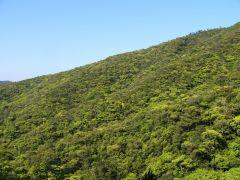 奄美大島の常緑照葉樹の森。モコモコとブロッコリーのよう。