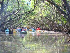 マンブローブの中をカヌーで散策