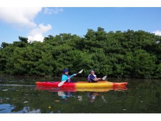 西表島でマングローブの川は外せない!