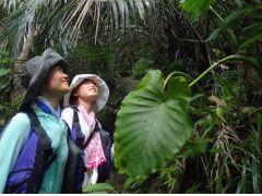 亜熱帯のジャングルはなんとも神秘的