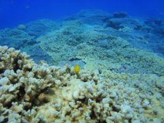 綺麗なサンゴ礁での体験ダイビング+シュノーケリング+ヨットクルーズ。ウミガメもいる加計呂麻島,奄美南部,大島海峡,初心者体験ダイビング2