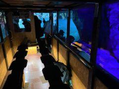 キャビンボートで寒くても大丈夫!洞窟は外での見学も可能