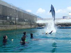 水中からジャンプ!