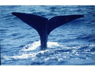 クジラに出会えたら大迫力