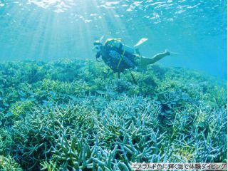 エメラルドに輝く海で体験ダイビング