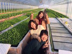 苗をベッドに浮いているパネルにはめていきます。土耕栽培とはまた違った楽しみとなります。