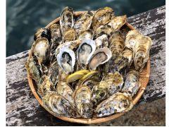 ぷりぷり&クリーミーな新鮮な牡蠣をご用意してお待ちしています♪
