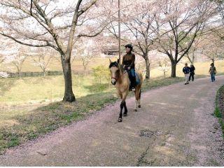 お馬さんを操り園内をお散歩