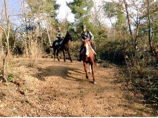 山道をお馬さんで駆け巡る