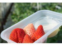 イチゴ狩りイメージ いちご狩りで採ったいちごをお好みでトレーの練乳につけてお召し上がりください