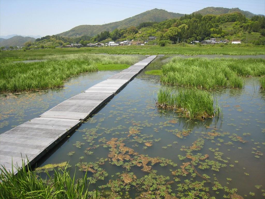湿地帯ぶらり散策~めだか池フットパス~
