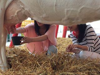 乳搾り体験とトラクターで大草原周遊コース 40分