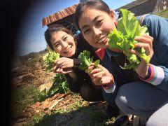 まずは野菜の収穫から。季節によって取れる野菜が違います
