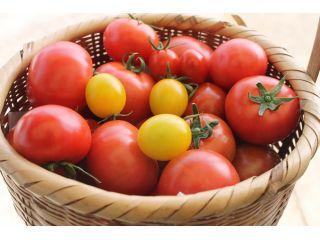ファミリーでトマト狩り2kgコース2