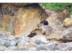 岩肌に寝そべるヒグマとそれを上から眺めるヒグマ☆ ヒグマは、日々色んな表情を見せてくれますので、リピーターも飽きさせません!