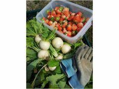 材料はシェフ自らが選んだ新鮮な野菜を使います