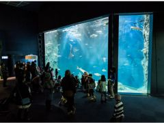 魚たちがエサを食べる様子は、他のお客様も水槽の前からご覧になれます