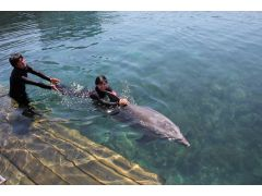 イルカの力強さと優しさをダイレクトに感じることができます。