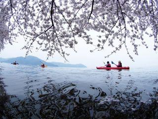 〜桜めぐり〜【大浦湾・奥出湾】お花見カヤックツアー体験(2名以上)
