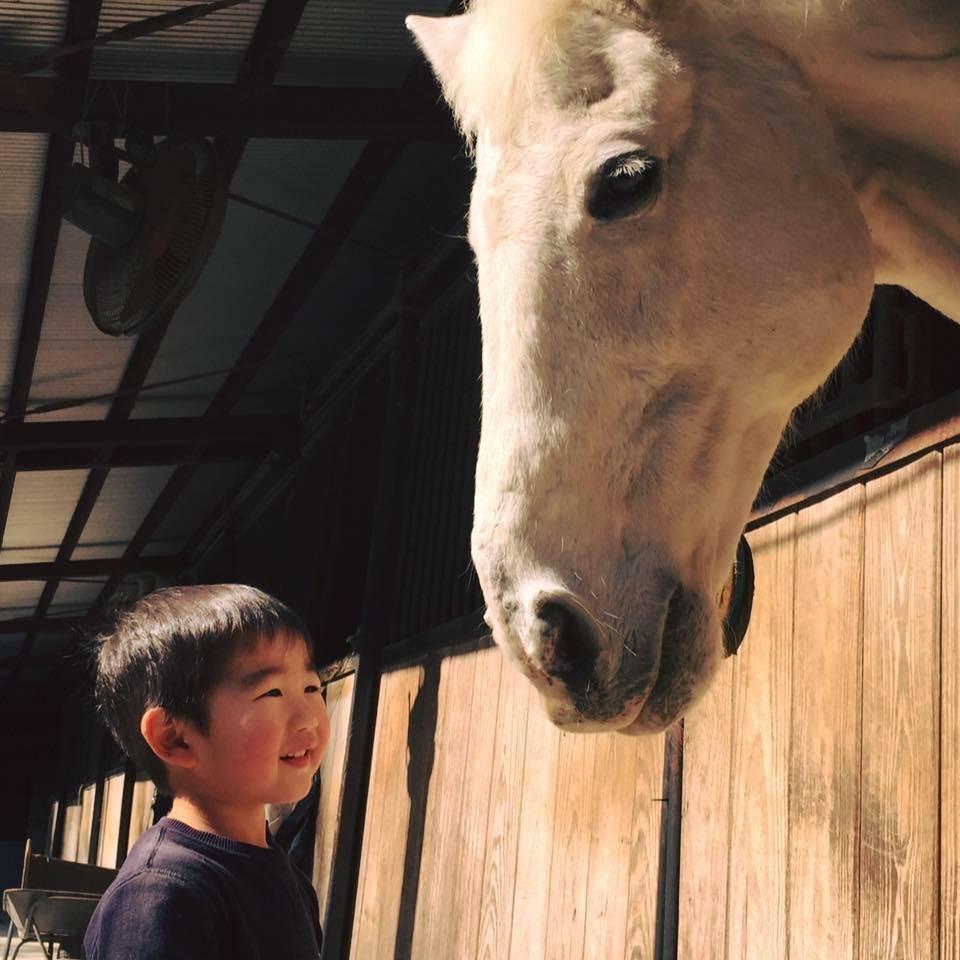 乗馬3周体験プラン♪大きな馬の背に乗って広場を3周する乗馬体験ができます。