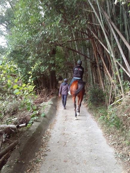 乗馬で優雅に竹林を歩いてみませんか♪しっかりとしたサポートで初めての方でも大丈夫